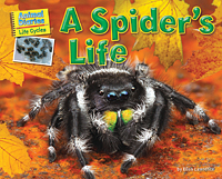 a-spiders-life