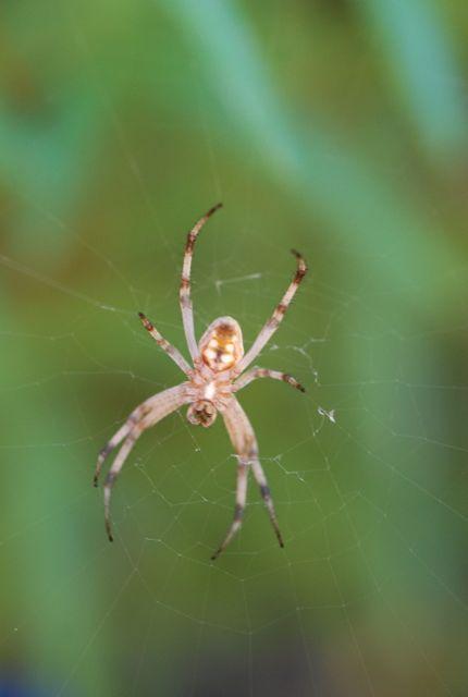 spider-for-STEM