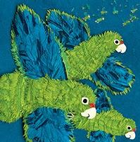 fd2f4-parrotsoverpuertorico