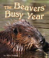 BeaversBusy