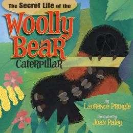 secret life of woolly bear