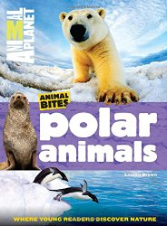 polar-animals