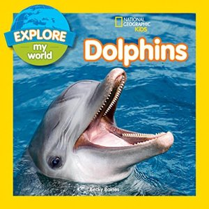 Dolphins NGK