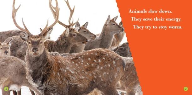 animalsinwinter_in1